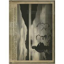 1974 Press Photo Linderman Caribou Nature Alaska - RRX95685