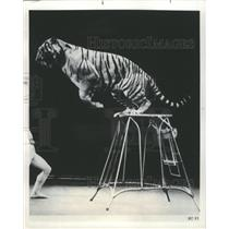 1976 Press Photo Soviet Circus Tigers - RRW46975