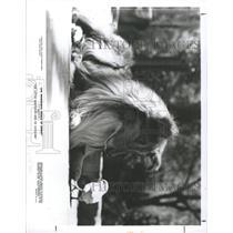 1977 Photo TV Show, The Little Shepherd Dog Of Catalina - RRX90387