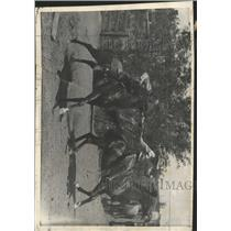 1936 Press Photo Riders Reenact mail pouch Pony Express - RRX94103