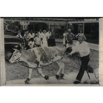 1957 Press Photo Guernsey Cow Roller Skates - RRX52161