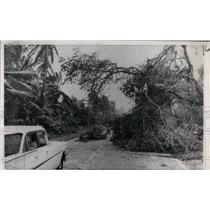 1960 Press Photo hurricane damage, Miami, FLA - RRW77141