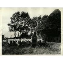1934 Press Photo French Peasant Flock Rouen France - RRX76999