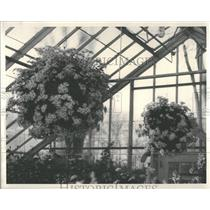 1935 Press Photo Chrysanthemums show at Detroit. - RRY17325