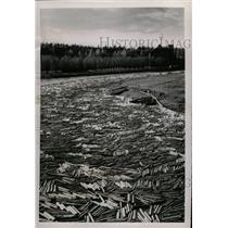 1953 Press Photo Dead tree River - RRX70699