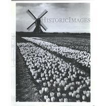 1978 Press Photo Windmill in a field of flowers - RRX88919