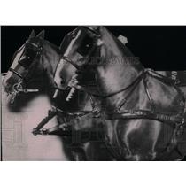 1928 Press Photo Two Lulu Longs Horses picture black - RRX44333