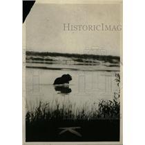 1929 Press Photo Animals Swimming Thelon River water - RRW97473