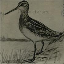 1925 Press Photo A Bird Outdoors Near Water - RRW73001
