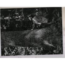 1935 Press Photo Hansen State Forest Inspected - RRW57391