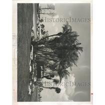 1962 Press Photo Port Charlotte Parkway Beautification - RRX91211