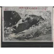 1971 Press Photo Heckl swimming Pan American games gold