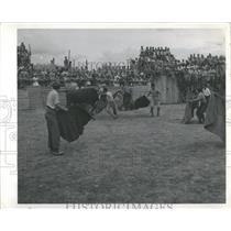 Press Photo Bullfighting Thrilling Illegal Sport Mich