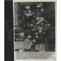 1952 Press Photo Japanese police communists hideout