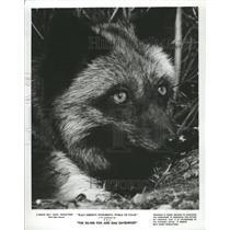 Photo Disney Movie, The Silver Fox And Sam Davenport