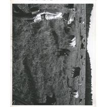 Press Photo Cowboy In Field With Cattle Herd - RRX89999