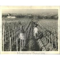 1938 Press Photo Yugoslavia- Rich in Vineyards & Corns. - RRX80843