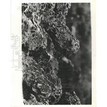 1981 Press Photo Volcanic Rocks - RRX96351