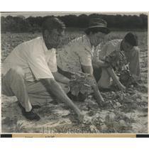Press Photo Tobacco Crop/Florida/Georgia - RRX86289
