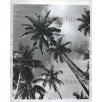 1947 Press Photo Philippine Republic Coconut Palm Trees - RRT74897