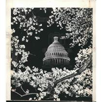 1948 Press Photo Capitol Building Framed In Cherry Blossoms