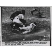 1954 Press Photo Vic Wertz Indians Scores Run Ed Fitzgerald Senators MLB Game