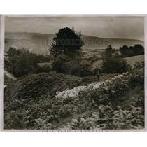 1930 Press Photo Sheep Dipping, North Wales, Llanrhaiadr Yn Mochnant - nez02657