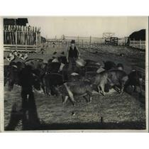 1930 Press Photo Chaz W Bryant & some of his thoroughbred hogs