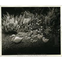 1900 Press Photo Set of Duck Figurines - nec56141