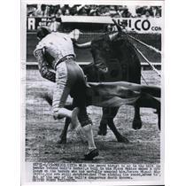 1956 Press Photo Mexico City, Mex. Bullfighter Miguel Angel Garcia in action