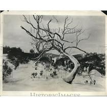 1931 Press Photo Snow Covers The Landscape of Koskiusko Mountain in Australia