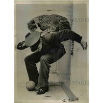 1936 Press Photo Boxing Betty Cheetah London England Zoo