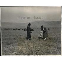 1931 Press Photo Joaquin Valley Calif wild flowers & tourists
