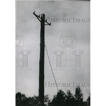 1938 Press Photo Telephone Wires Erected on the Czecho-German Frontier