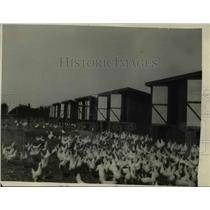 1928 Press Photo Hooven Poultry Farm
