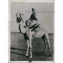 1937 Press Photo The duke of Aosta as he rides a camel