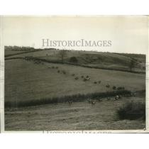 1929 Press Photo Air view of hunt & Cottesmore hounds in Leicestshire