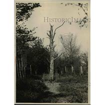 1928 Press Photo Bellaeu Wood - nee00703