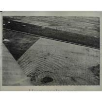 1937 Press Photo Red River Minnesota Wheat - nee01114