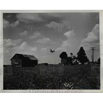 1945 Press Photo of a Sunday flier over the Eisenberg place.
