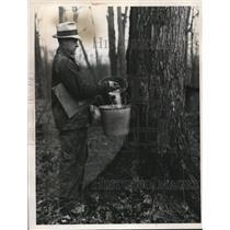 1931 Press Photo Farmer Collects Maple Tree Sap at Granger Township Farm, Ohio