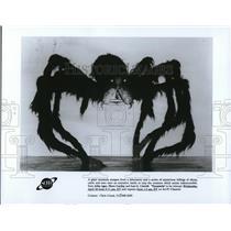Press Photo Turantula