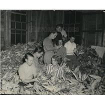 1939 Press Photo Black Mountain Students is doing some Corn-husking