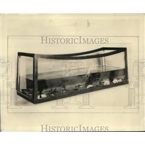 1929 Press Photo Fish Aquarium Made of Shattered Triplex Windshields - nee01542