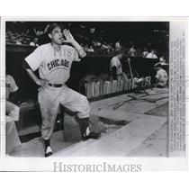 1951 Press Photo Veteran Phil Cavaretta Yells Encouragement To His Team