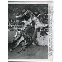 1960 Press Photo Dallas Tex CaseyTibbs on My Buddy bronco - nes25856