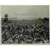1938 Press Photo Growth of the Carl Williams farm outside of Iowa City