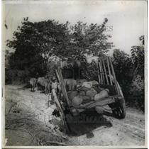 1942 Press Photo Mauqanese being hauled by Cuban Farm Cart - nee15580
