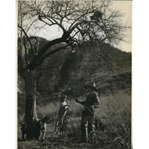 1936 Press Photo A wild car treed by a hunter & his dog - nes26896
