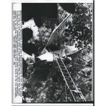 1956 Press Photo Plane Caught in Tree After Crash, Rock Creek Park Washington